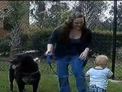 Gestul INCREDIBIL al acestui caine pentru un copil! Ce a facut a absolut UNIC! Povestea care a emotionat milioane de oameni