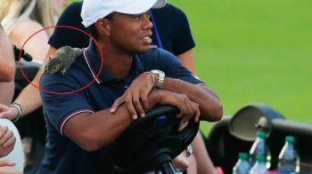 VIDEO: Tiger Woods, 'atacat' ieri in timpul unui meci de golf! Cum a reactionat cand si-a dat seama ce are pe spate: