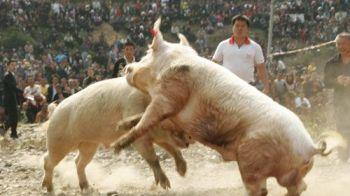 """Cel mai ciudat sport din 2014! """"Mii de oameni vin la aceste lupte!"""" Care este cea mai iubita competitie in China! VIDEO"""
