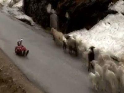 """Povestea incredibila a SINGURULUI indian calificat la Jocurile Olimpice de la Soci! Face slalom printre oi si masini: """"Nimeni nu stie de acest sport"""""""