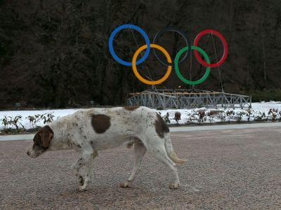 Like si CHER pentru cainii vagabonzi de la Soci! Cantareata s-a implicat intr-o campanie pentru salvarea cainilor de la eutanasiere!