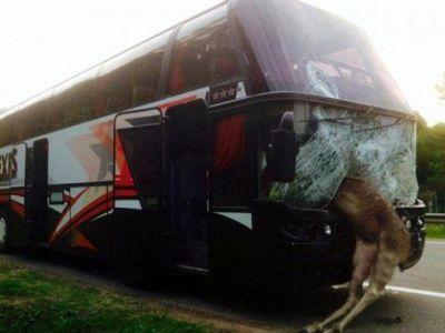 Accident BIZAR. Un ELAN a fost lovit de un autocar, imaginile sunt tulburatoare. Ce au descoperit politistii e incredibil