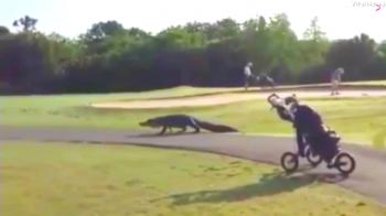 Moment incredibil la un turneu de golf. Cum au reactionat jucatorii cand s-au trezit cu un aligator in fata lor