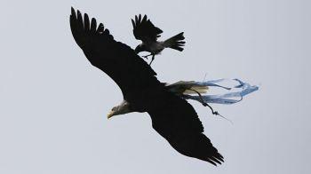 Vulturul lui Lazio, atacat de o cioara! Fanii s-au temut ca e semn rau! Ce s-a intamplat cu echipa la finalul meciului: