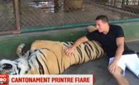 Imagini spectaculoase cu cainele rau din Local Kombat, dinamovistul Spetcu: imblanzeste tigrii in Thailanda! VIDEO