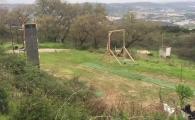 Olimpiada animalelor! Faze senzationale reusite de acesti caini din Portugalia
