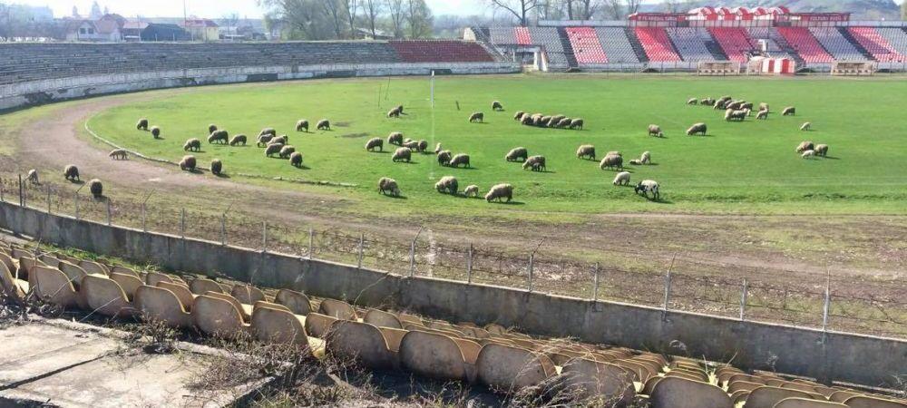 """Se intampla in Romania. Stadionul unei foste castigatoare a Cupei Romaniei a ajuns pasune pentru oi: """"Anul trecut era groapa de gunoi"""""""