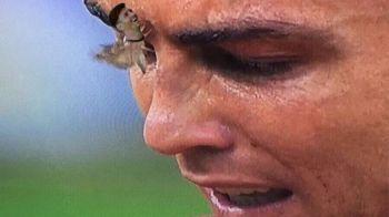 FOTO GENIAL! Cele mai tari MEME-uri aparute pe internet dupa ce Cristiano Ronaldo a fost ATACAT DE MOLII
