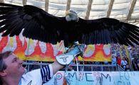 Povestea fabuloasa a vulturului de la Lazio: 125.000 € pe an costa intretinerea lui si e ruda cu vulturii de la Benfica si Ludogorets