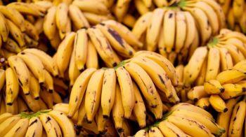 Fructul preferat de MII de fotbalisti ar putea sa DISPARA! Anuntul teribil al specialistilor: dispar bananele!