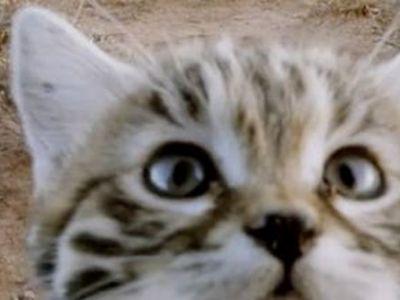 Motivul pentru care aceasta pisicuta adorabila a fost numita CEA MAI LETALA din lume. Cum isi vaneaza prada