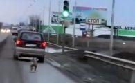 Viralul zilei. Un caine a alergat ZECI de km dupa masina stapanului care l-a abandonat in padure! VIDEO