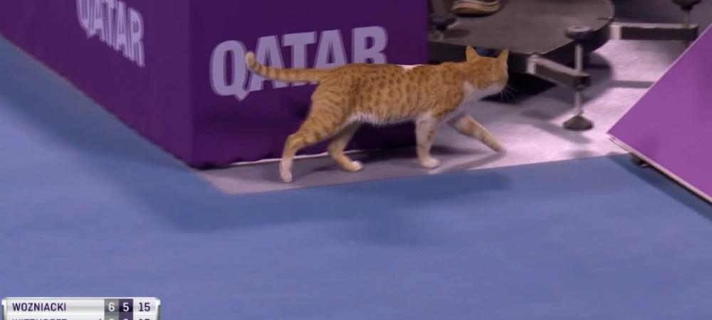 Din pacate, n-a fost neagra! :) O PISICA a intrat pe teren la meciul lui Wozniacki de la Doha. FOTO