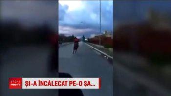 Scene incredibile: a iesit cu calul pe sosea si s-a luat la intrecere cu masinile, dar a sfarsit la spital! VIDEO