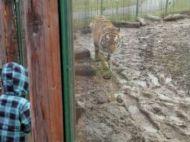 O mama si copiii sai, uitati in Gradina Zoologica din Oradea. Ce a urmat