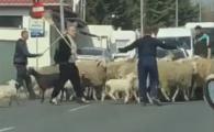 FABULOS! Becali, cu MATURA dupa oi in strada! Patronul FCSB a blocat traficul din Pipera! VIDEO