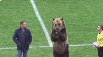 VIDEO   IMAGINI DEMENTIALE in Rusia: ursul Tim, sef de galerie la un meci de liga a treia!