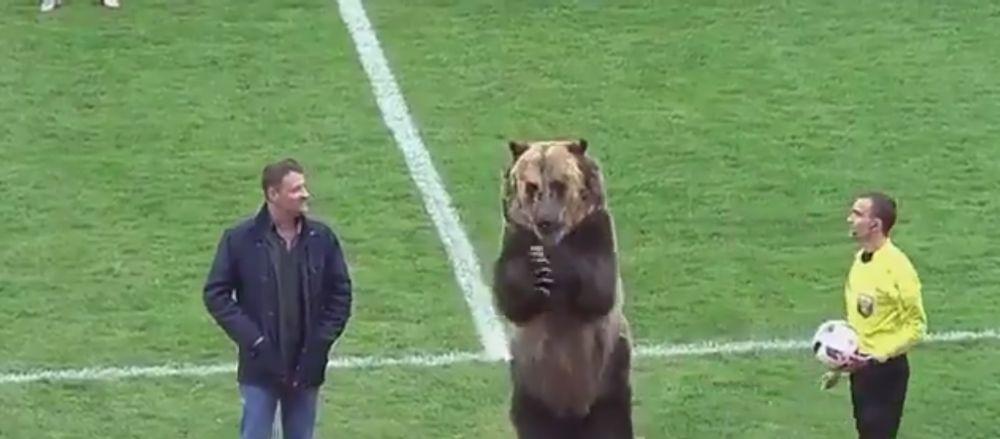 VIDEO | IMAGINI DEMENTIALE in Rusia: ursul Tim, sef de galerie la un meci de liga a treia!