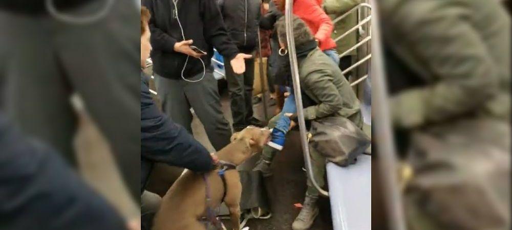 Un pitbull ataca o femeie la metrou, dupa ce aceasta il loveste cu stapanul de fata! IMAGINI SOCANTE