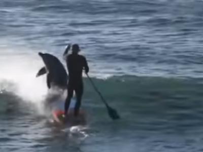 Ce se intampla cand un surfer se intalneste cu un grup de delfini venind in viteza spre el! VIDEO