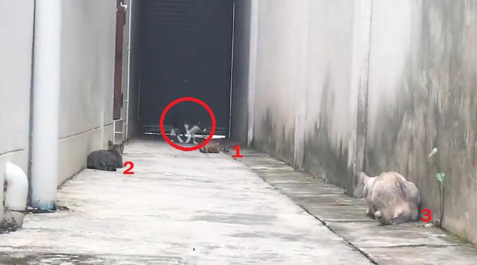 Asta e pisica lui BATMAN! Cum pacaleste 3 pisici care o prinsesera in colt si urmau sa o atace - VIDEO