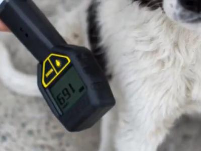 Cum arata cainii radioactivi ce au fost parasiti in Chernobyl, la 32 de ani de la dezastrul nuclear!