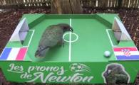 Newton a ales castigatoarea Cupei Mondiale! Unde a bagat papagalul oracol mingea :) VIDEO
