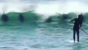 Era urmarit de 5 delfini in drum spre mal! Clpul momentului a fost vazut de peste 6 milioane de oameni. Ce se intampla in secunda urmatoare