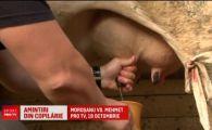 """""""Unde-i vaca nenorocitule? N-ai avut grija de vaca!"""" Amintiri din copilaria lui Morosanu! Ce a facut luptatorul inaintea meciului de pe 19 octombrie, la Pro TV"""