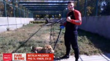"Lupta de basm la ""Batalia Moldovei"", in direct la ProTV, vineri, 23:15! ""Ucigasul de zmei"" si ""Imblanzitorul de lei' vor sa isi distruga adversarii in ring"