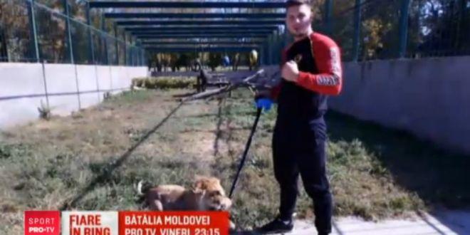 Lupta de basm la  Batalia Moldovei , in direct la ProTV, vineri, 23:15!  Ucigasul de zmei  si  Imblanzitorul de lei  vor sa isi distruga adversarii in ring