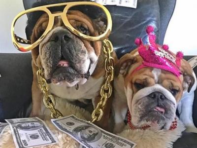 Nu e gluma! Cainele lui Hamilton castiga 700$ pe zi si si-a facut ziua ca milionarii :)