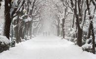 ULTIMA ORA. Vin ninsorile peste Romania! Zonele care vor fi acoperite de zapada in scurt timp