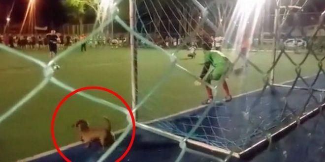 CAINELE care apara penalty! A aparut de nicaieri si l-a salvat pe portar! :) VIDEO AICI