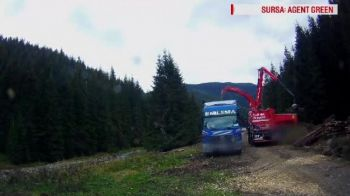 Arbori taiati ilegal si tocati, pentru a li se pierde urma. Reactia firmelor care au cumparat deseul lemnos