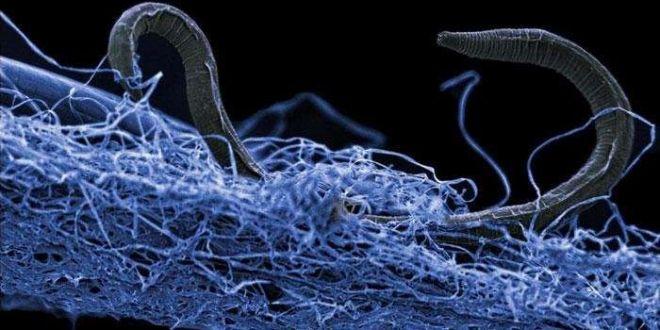 Un ecosistem urias, descoperit in adancurile Pamantului! Ce specii traiesc în subteran