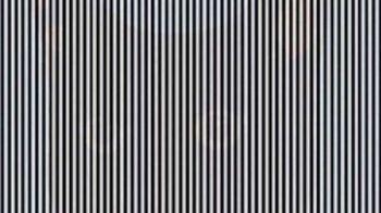 Poti observa animalul ascuns in imagine? Iluzie optică incredibila!