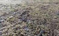 Miercurea Ciuc - Craiova | Imagini IREALE cu gazonul inaintea meciului! Reactia jucatorilor Craiovei cand l-au vazut