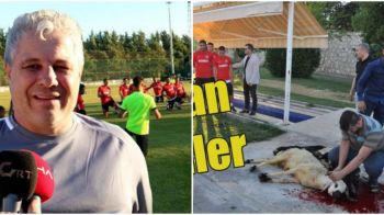 Imagini uluitoare la antrenamentul lui Sumudica! Turcii au sacrificat o oaie pe teren si s-au rugat sa bata granzii in noul sezon!