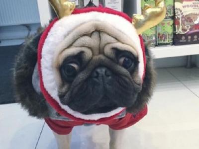"""S-a dat cu """"cainii""""? Stelistul Gabi Balint se lauda pe internet cu noua sa achizitie canina, care ii ia locul lui """"Covrig"""" :)"""