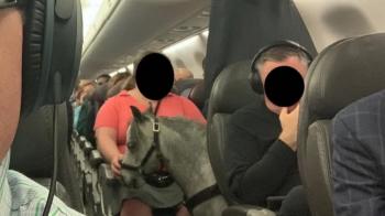 Ce s-a intamplat cu femeia care a adus un ponei in avion cu ea. Pasagerii au reactionat imediat
