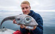 """O creatura marina neobianuita, """"CA UN DINOZAUR"""", a fost prinsa in apele din Norvegia"""