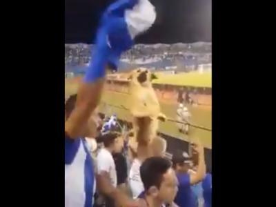 WHO LET THE DOGS OUT? Ce se intampla cand iti aduci cainele in tribuna! Reactia nebuna a fanilor! VIDEO