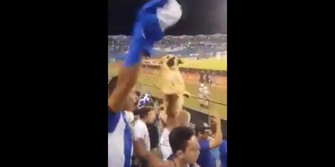 WHO LET THE DOGS OUT? Ce se intampla cand iti aduci cainele in tribuna! Reactia nebuna a fanilor! VIDEO