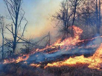 Tragedie imensa in Hunedoara. O persoana a murit arsa si un incendiu urias mistuie dezlantuit padurile din judet!