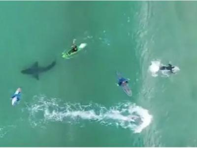 Imaginile momentului! Au iesit in larg fara sa stie ca un mare rechin ucigas inoata sub ei si totul a fost filmat! E uluitor ce a urmat