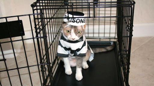 Prison Break felin! :) Pisica bagata la inchisoare pentru trafic de droguri a evadat!