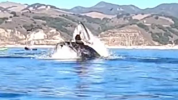 VIDEO   Si-au vazut moartea cu ochii! Doua femei au fost aproape sa fie INGHITITE de o balena! Imagini cu puternic impact emotional