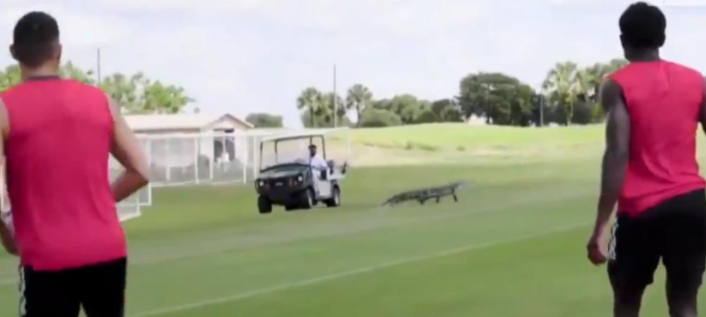 Surpriza nedorita la antrenamentele unui club din America! Un aligator a intrat pe gazon si i-a speriat pe jucatori