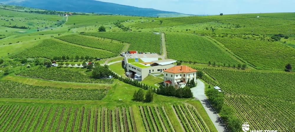"Povestea Cramei Lacerta, in primul episod al show-ului ""Wine Trips Romania"". Informatii impresionante despre podgoria si vinurile produse"
